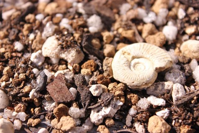 瑞浪市化石博物館について、割引や営業時間、交通アクセスなど、行く前に知っておきたいこと4つ