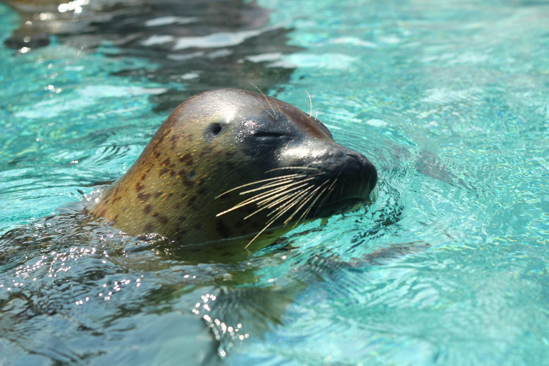 JAFは?竹島水族館の7つの割引方法と基本料金まとめ【+営業時間、交通アクセス、駐車場など】