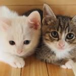妊娠中のペットに注意!トキソプラズマの影響と感染率について知っておこう