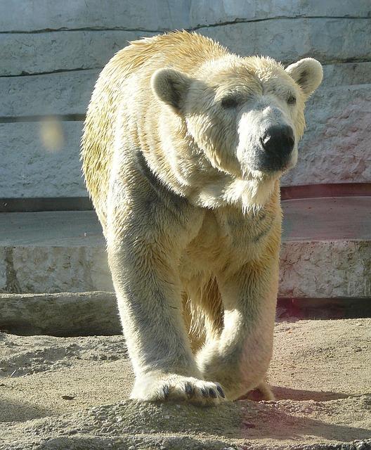 浜松市動物園の5つの割引方法と基本料金まとめ