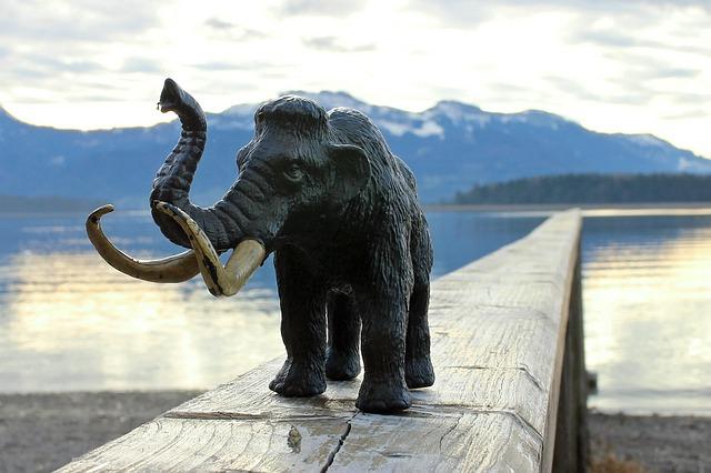 野尻湖ナウマンゾウ博物館の5つの割引方法と基本料金まとめ