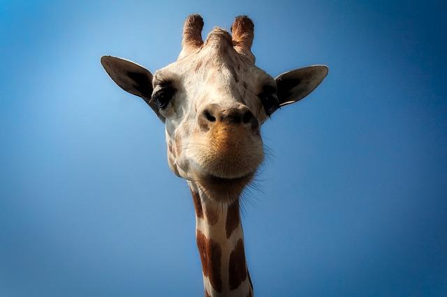 【無料開園日も!】上野動物園の7つの割引方法(クーポン)と基本料金まとめ