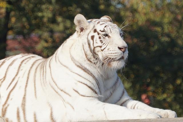 東武動物公園の10の割引方法(クーポン)と基本料金まとめ