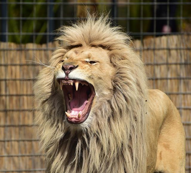【無料開放日も!】多摩動物公園の7つの割引方法(クーポン)と基本料金まとめ