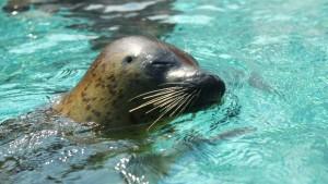 駐車場・割引・交通アクセスなど、竹島水族館について調べた