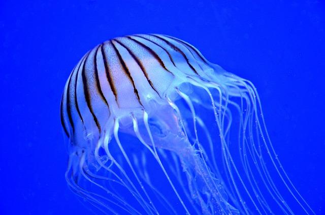 鶴岡市立加茂水族館の3つの割引方法と基本料金まとめ【営業時間、アクセスなど】