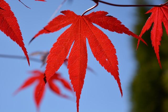 東山動植物園の8つの割引方法(クーポン)と基本料金【無料開放日も】