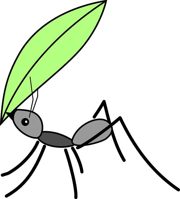 群馬県立ぐんま昆虫の森の7つの割引方法(クーポン)と基本料金まとめ